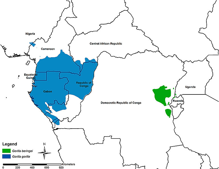 Map-gorilla_subspecies--no-field-sites2.jpg