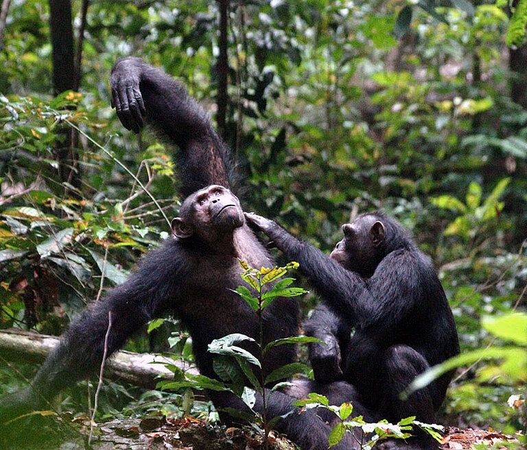 Loango-Chimpanzee-Project.jpg