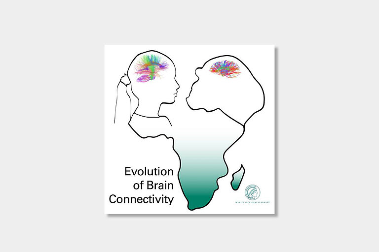 Evolution_of_Brain_Connectivity.jpg