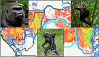 Great Ape Evolutionary Ecology and Conservation